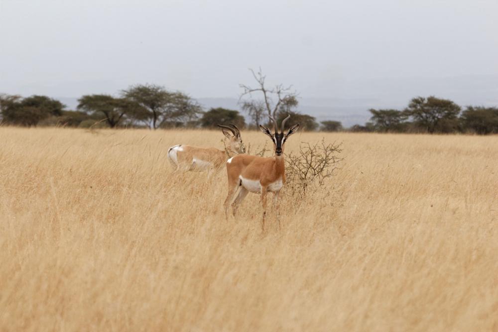 Safari en Ethiopie : où observer les animaux ?